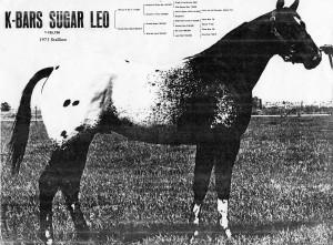 K-Bars Sugar Leo