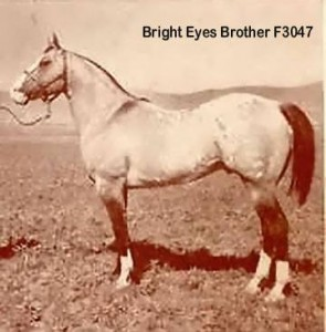 Bright Eyes Brother