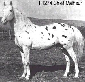 Chief Malheur F1274