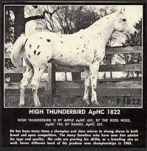 High Thunderbird F1822 (a)