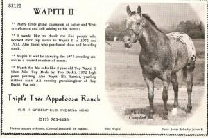Wapiti II 83121