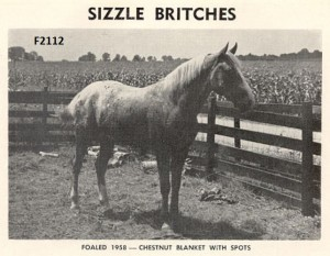 Sizzle Britches F2112